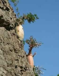 Socotra.nojavanha (24)