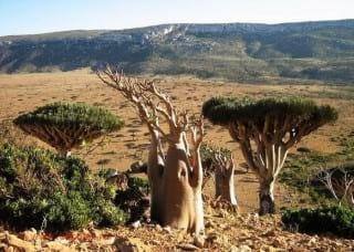 Socotra.nojavanha (26)