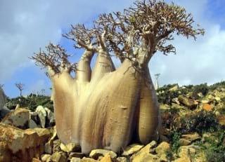 Socotra.nojavanha (28)