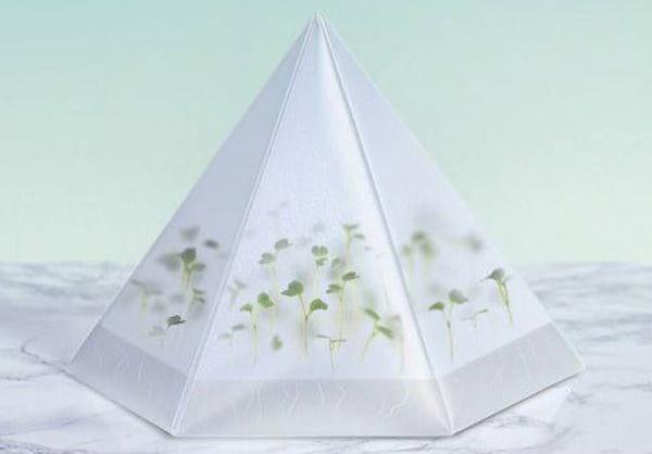 Micro Greenhouse.nojavanha (1)