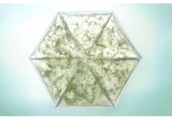 Micro Greenhouse.nojavanha (2)