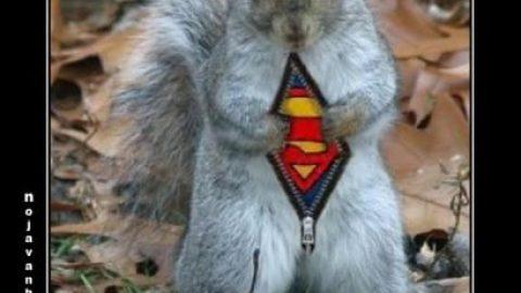 سنجاب سوپرمن!