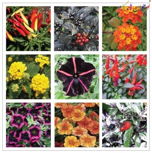 Winter and Plants.nojavanha (1)