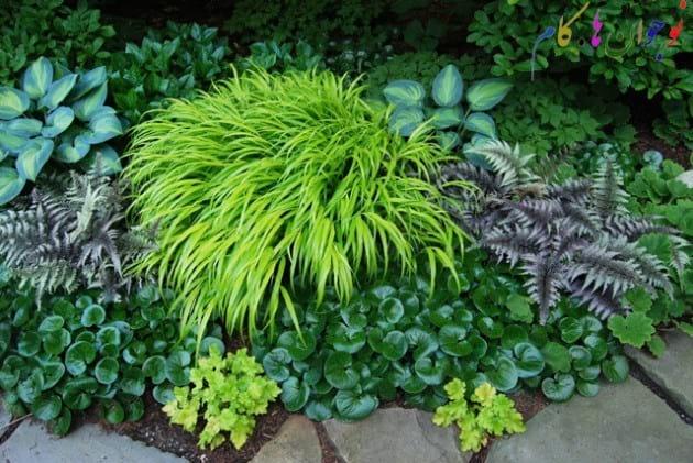 Winter and Plants.nojavanha (2)