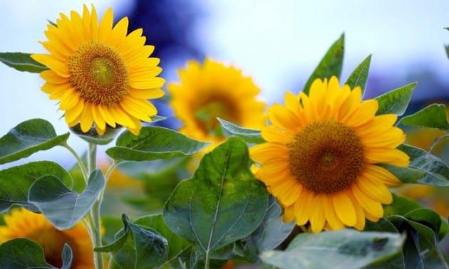 flower.nojavanha (11)