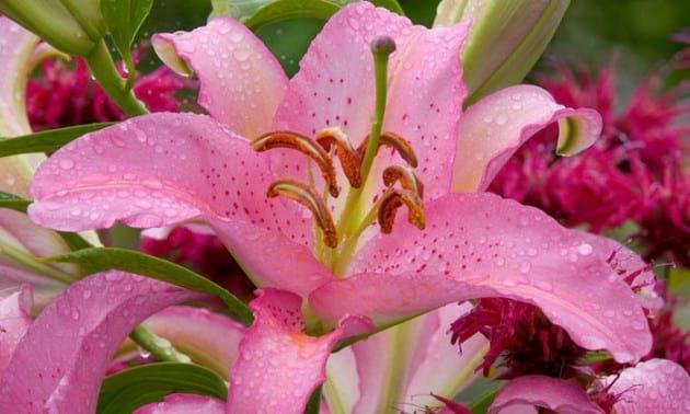 flower.nojavanha (12)