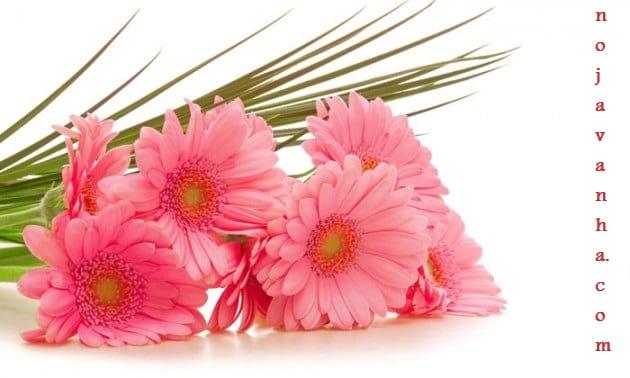 flower.nojavanha-14-630x378