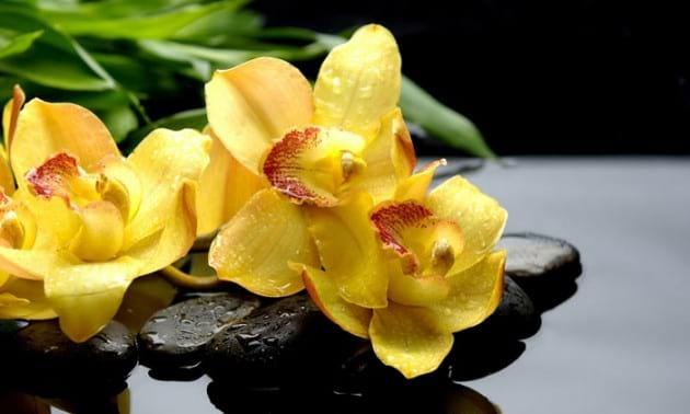 flower.nojavanha (16)