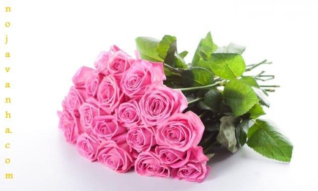 flower.nojavanha-18-630x378
