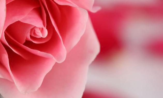 flower.nojavanha (2)