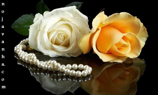 flower.nojavanha-5-630x378