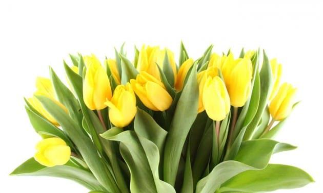flower.nojavanha (6)