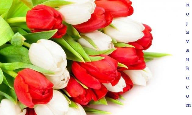 flower.nojavanha-8-630x378
