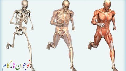 اطلاعات عمومی بدن ما (دستگاه اسکلتی)