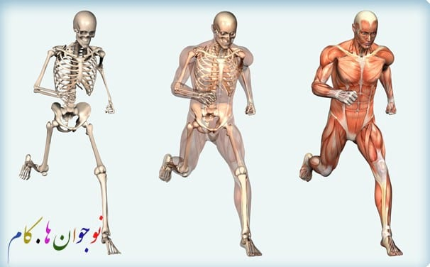 musculoskeletal.nojavanha