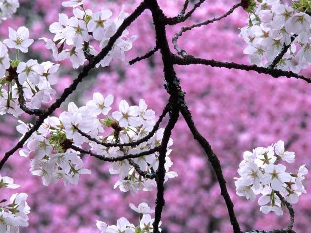 spring.nojavanha