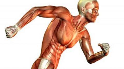 مشکلاتی که با استخوان ها، عضلات و مفاصل ارتباط دارند