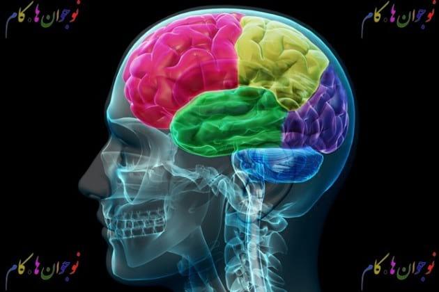 brain.nojavanha (3)