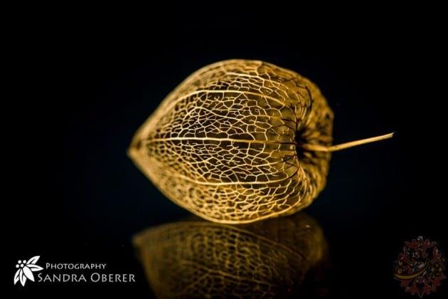 golden images.nojavanha (30)