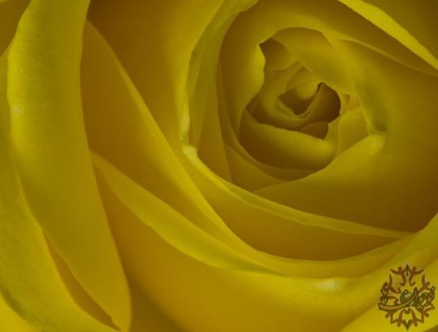 golden images.nojavanha (8)