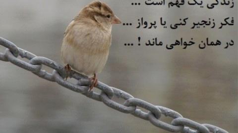 شما به فکر زنجیر هستید یا پرواز؟