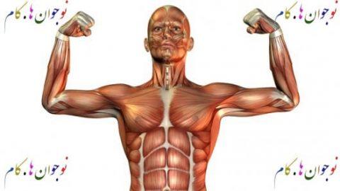 اطلاعات عمومی بدن ما (سیستم اسکلت)