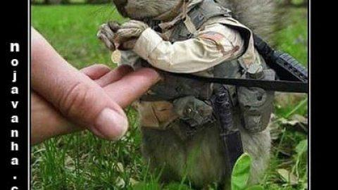 شکارچی شجاع