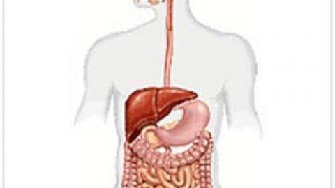 اطلاعات عمومی بدن ما بخش ۱ (دستگاه گوارش)