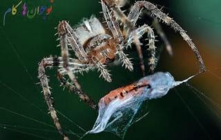 Spiders.nojavanha (2)