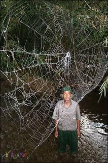 Spiders.nojavanha (4)