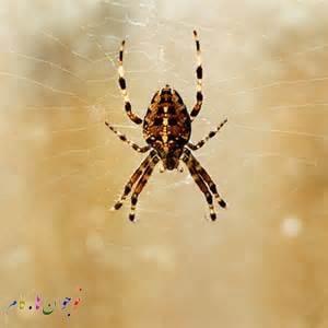 Spiders.nojavanha (5)