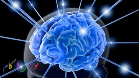 مغز، رئیس بدن (۳)