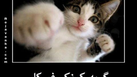 گربه کونگ فو کار