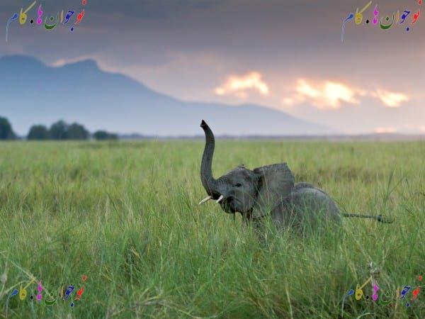 elephant.nojavanha