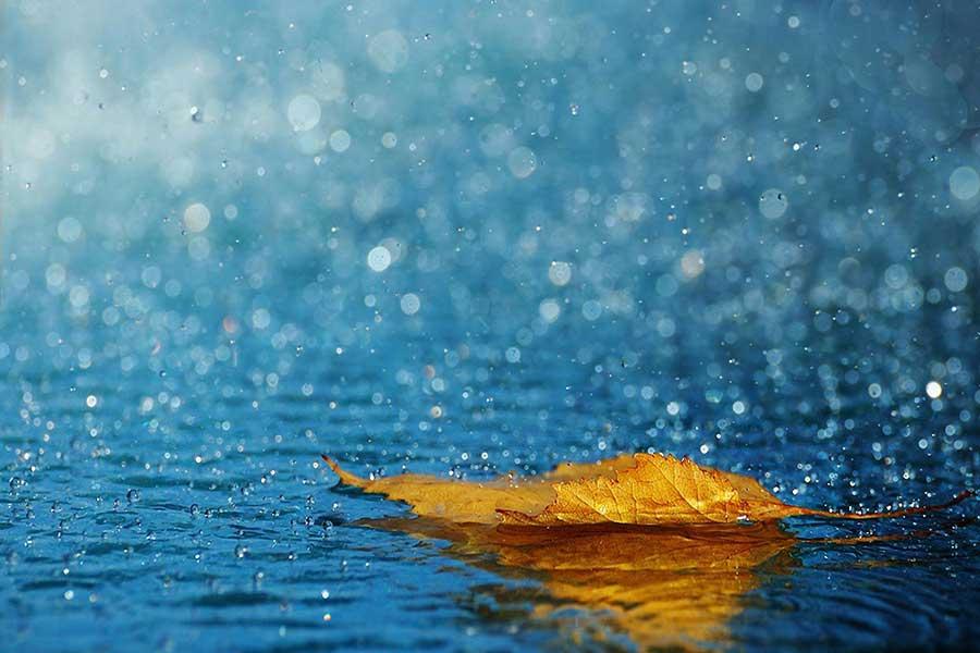روز با طراوت بارانی