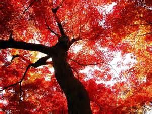 Autumn-nojavanha