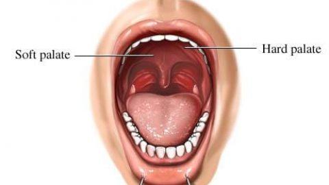 نقش دهان و دندان در هضم غذا