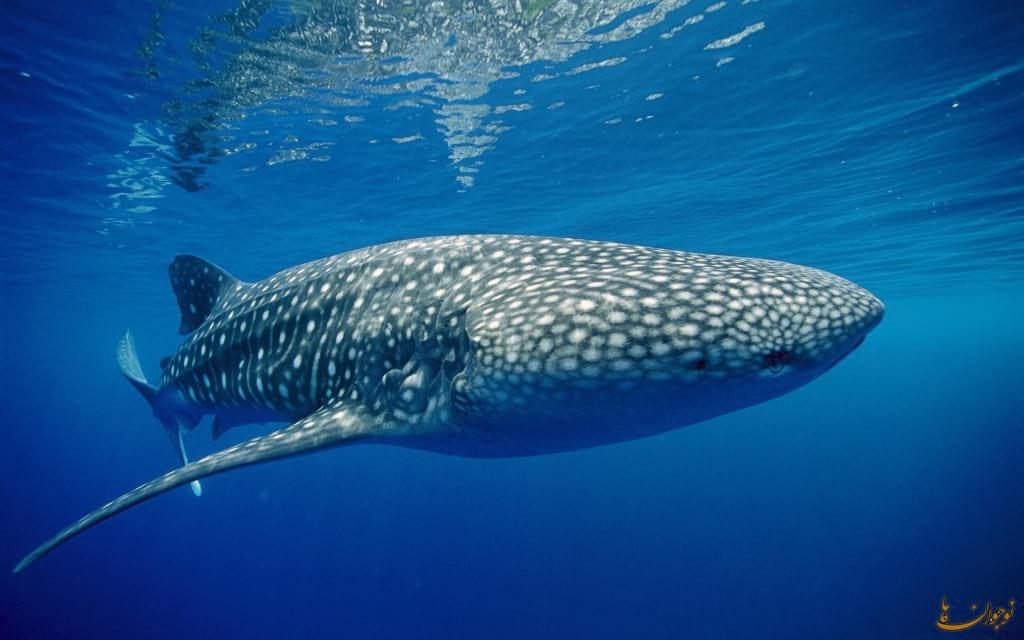دنیای زیبای نهنگ ها