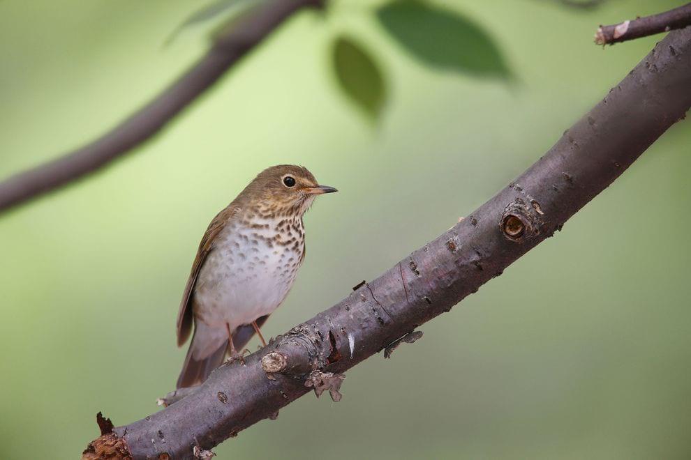 Bird.nojavanha (1)