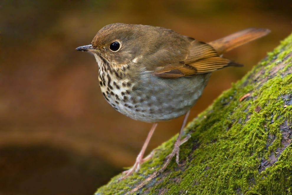 Bird.nojavanha (2)