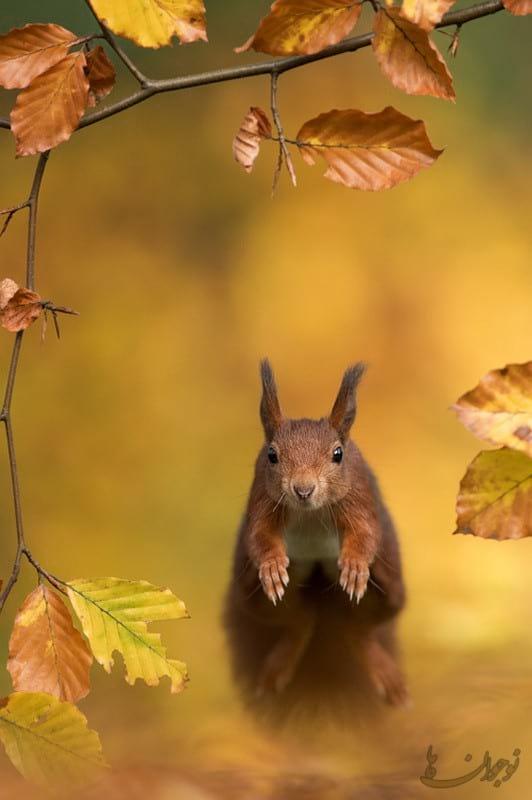Pictures of Autumn-nojavanha (11)