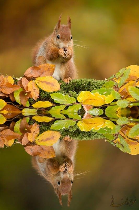 Pictures of Autumn-nojavanha (5)