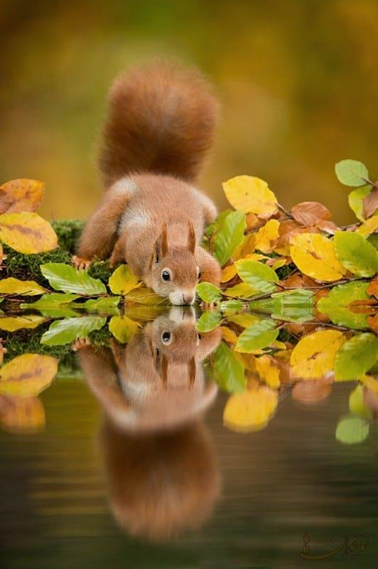 Pictures of Autumn-nojavanha (8)