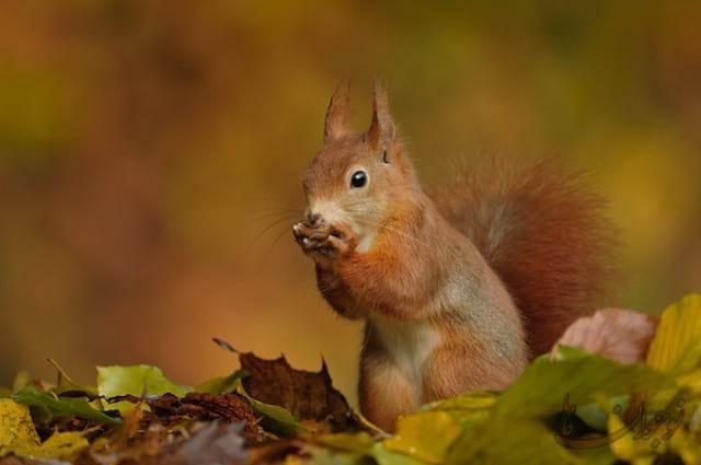 Pictures of Autumn-nojavanha (9)