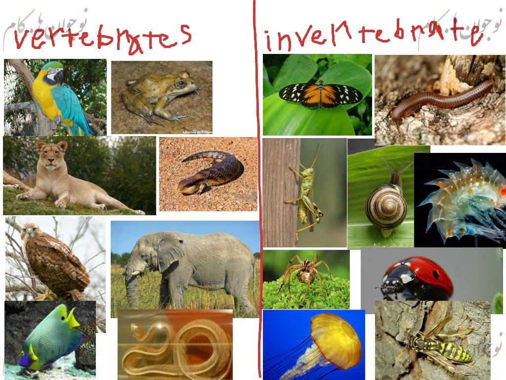 World vertebrates-nojavanha (1)
