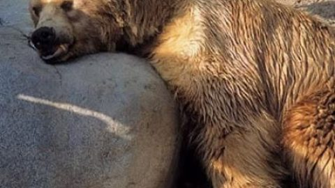 حیوانات چگونه می خوابند؟