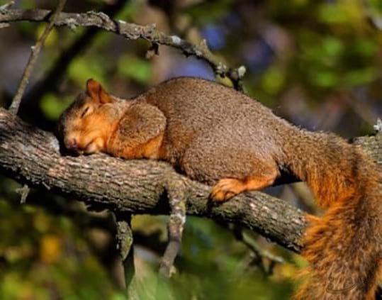 sleep.nojavanha (4)