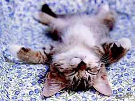 sleep.nojavanha (5)