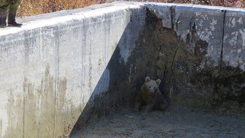 توله خرس قهوه ای با فداکاری مرد روستایی از مرگ نجات یافت