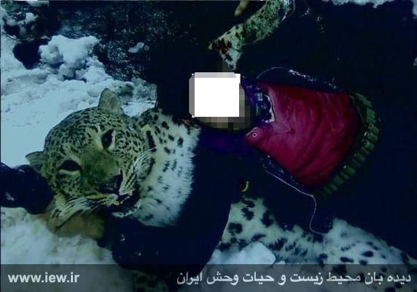 Panther-nojavanha (2)